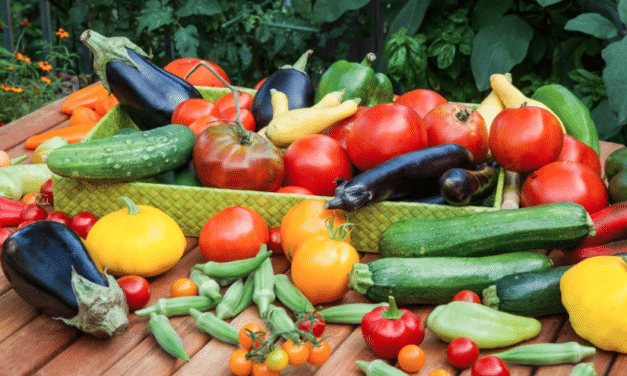 Planning overview for your edible garden